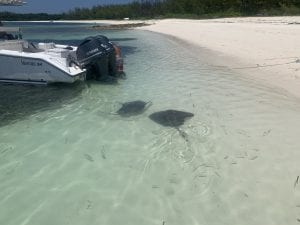 Stingrays Fish Cay Bahamas Captain